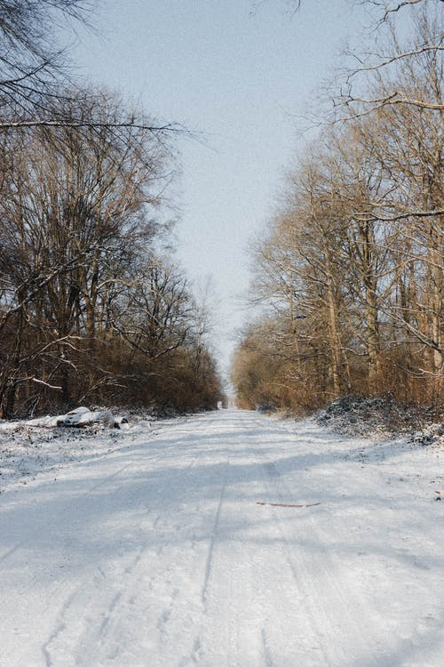 Straight roadway covered with snow going through leafless trees growing in woods in rural area on winter day in nature
