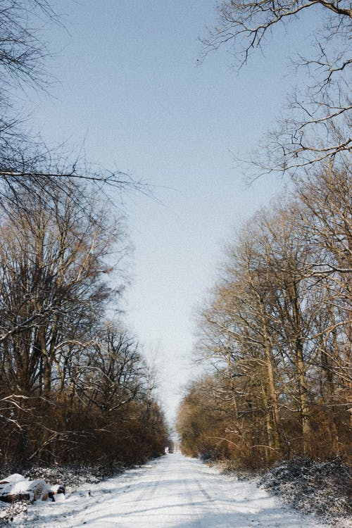 Empty straight route covered with white snow going between tall trees against blue sky in nature on cold winter day
