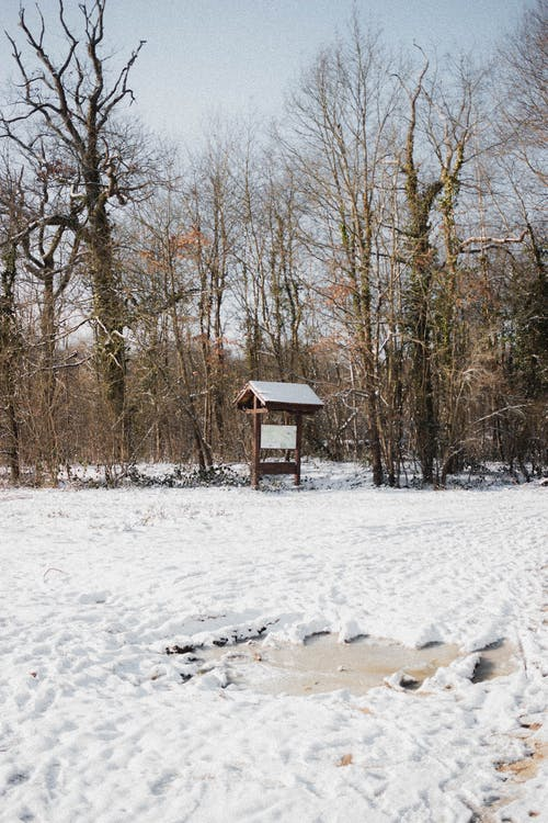 Wooden structure with roof and signboard on snowy ground near forest with tall leafless trees in nature on winter day