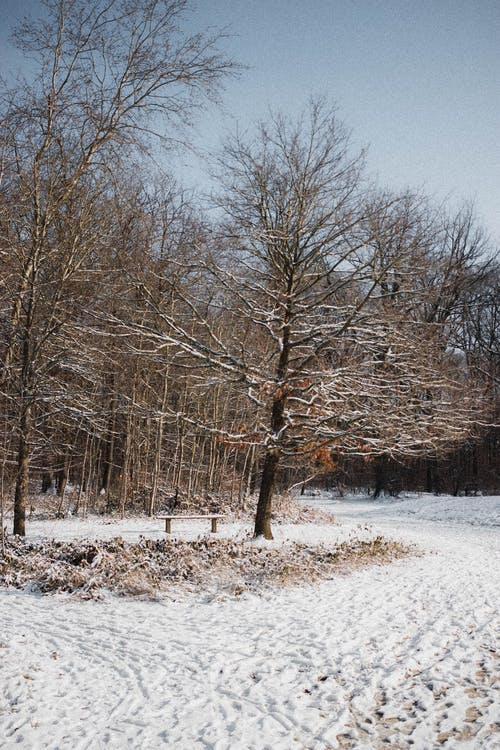 Trees growing on snowy ground
