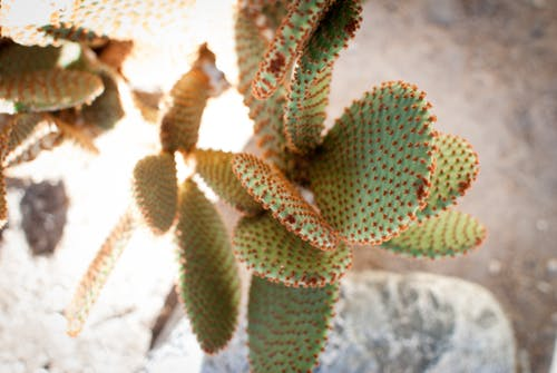 Free stock photo of cactus, colors, nature