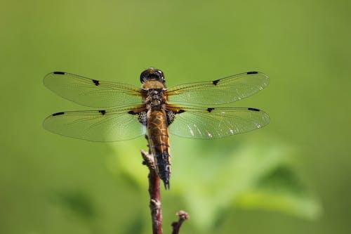 Бесплатное стоковое фото с крылья, максросъемка, насекомое, снимок крупным планом