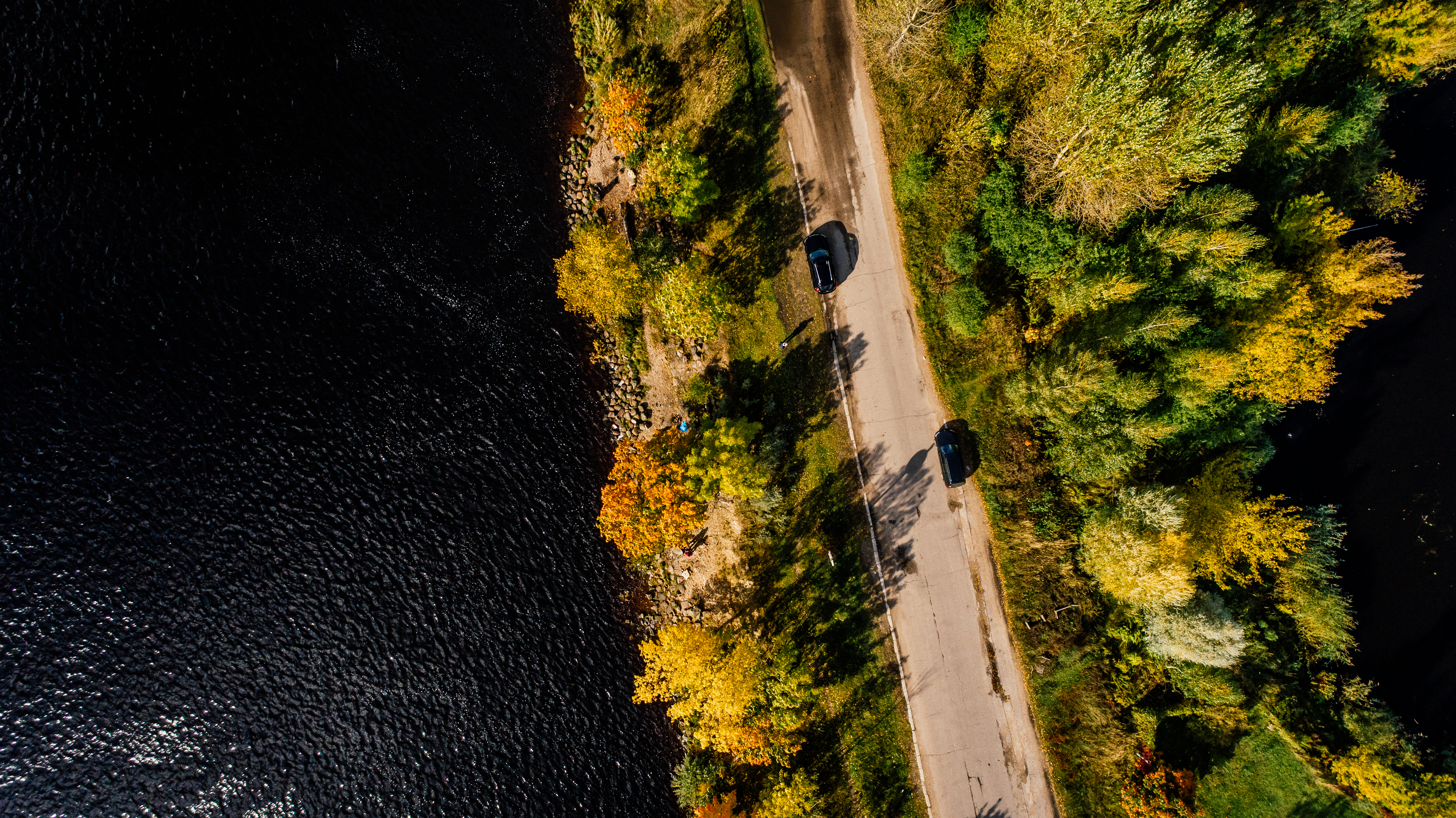 Aerial Photography of Road Between Trees on Body of Water