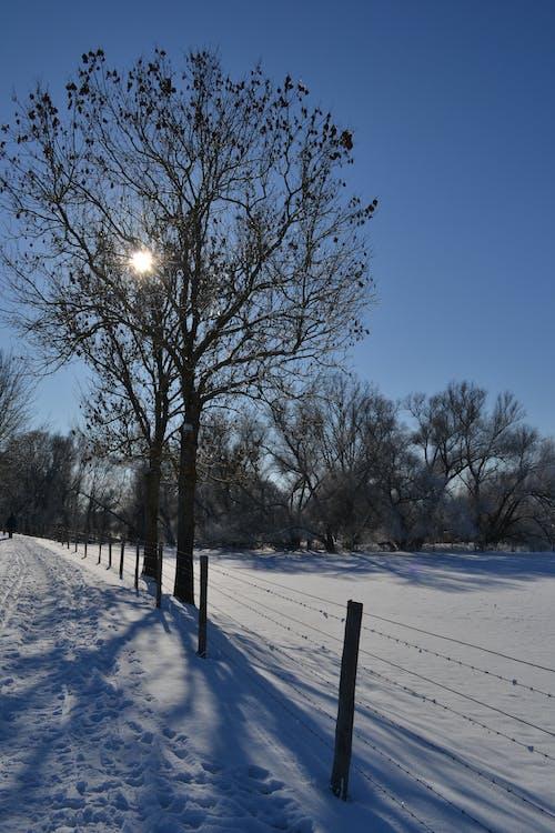 Foto profissional grátis de inverno, paisagem, schnee