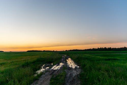 Photos gratuites de agriculture, après la pluie, atmosphère de soirée