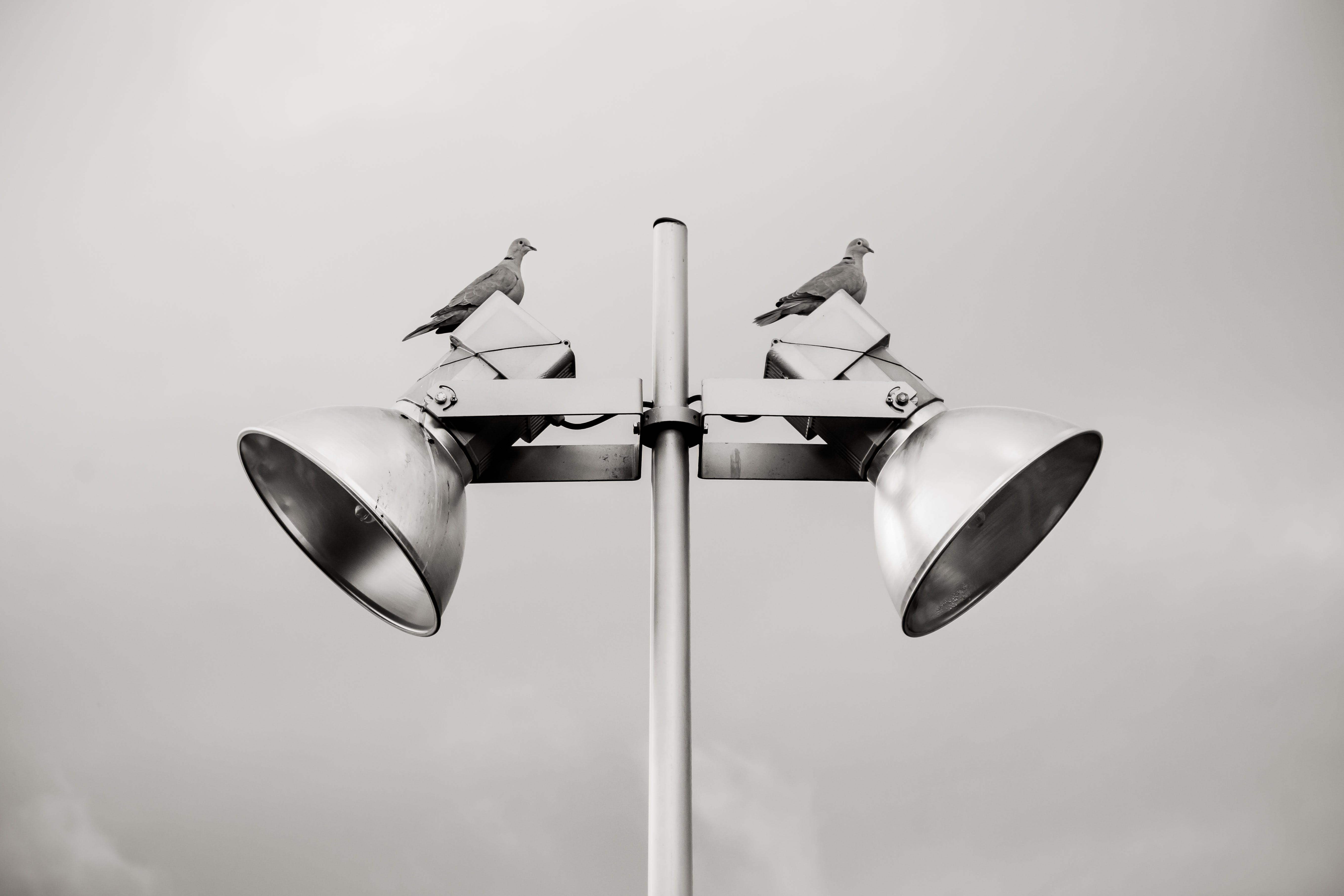 Two Pigeon Perched on White Track Light