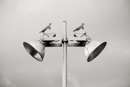 Free stock photo of bird, metal, lamp, birds