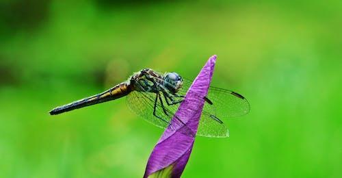 Gratis lagerfoto af guldsmed, insekt, insektfotografering