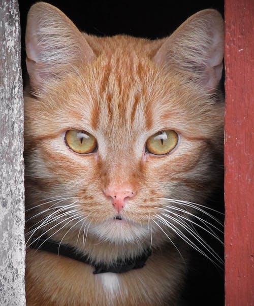 Δωρεάν στοκ φωτογραφιών με αιλουροειδές, Γάτα, γατάκι