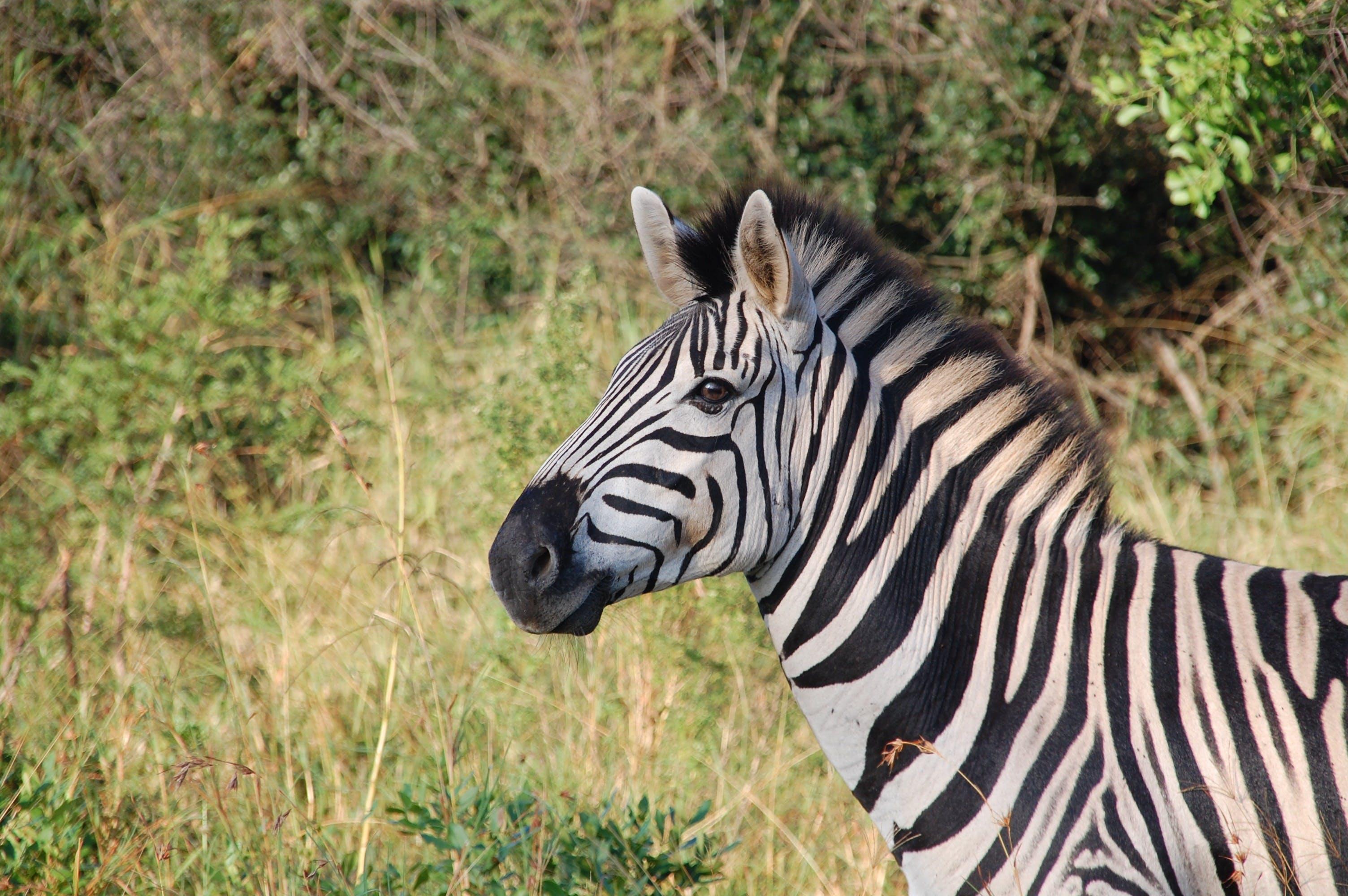 Zebra Near Green Plants