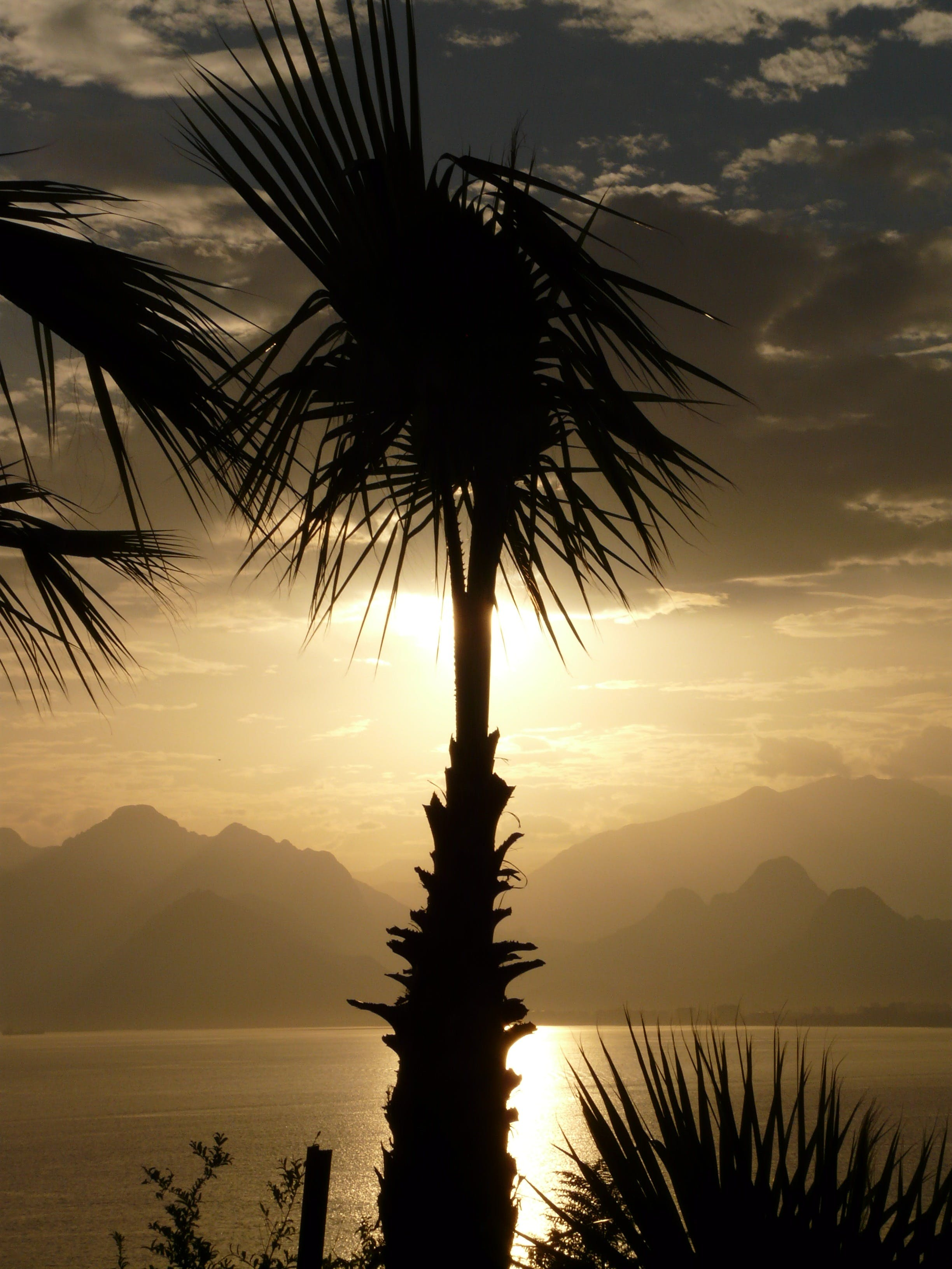 Silhouette Photo of Coconut Tree Beside the Body of Water