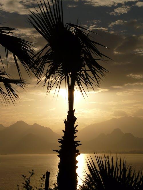 ココナッツの木, 山岳, 山脈, 日の出の無料の写真素材