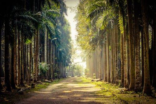 Immagine gratuita di alberi, alberi di cocco, foglie autunnali, foresta