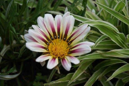 Безкоштовне стокове фото на тему «brautif, квітка, квітучий, красиві квіти»