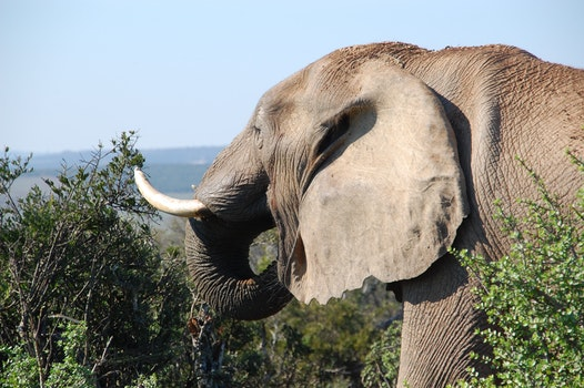 Grey Elephant by the Bushes at Mountain Top during Daytime