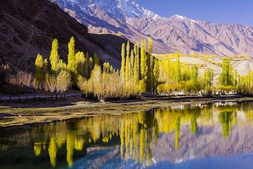 Panoramic Photography of Green Trees Near Mountain Range