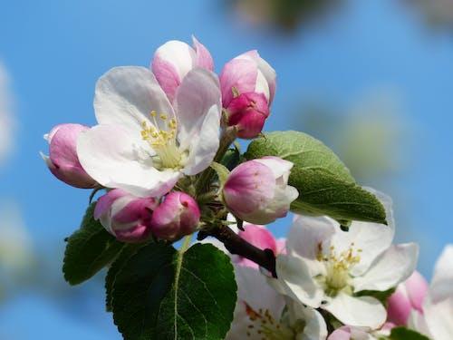 Kostenloses Stock Foto zu blühen, blumen, blüte, flora