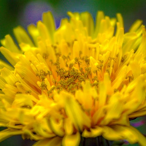 Free stock photo of flower, macro, summer