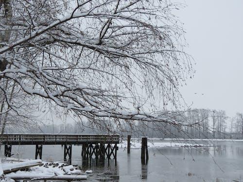 Free stock photo of british columbia, dock, fraser river