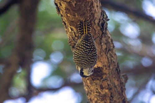 Immagine gratuita di animali, animali selvatici, birdwatching