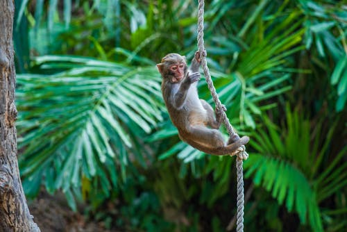 A Monkey Hanging on a Rope