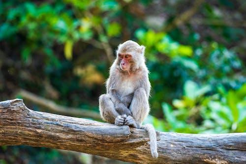 A Monkey Sitting on Tree Branch