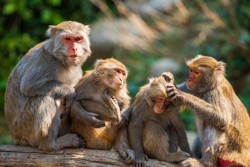 Monkeys Sitting on a Tree Branch