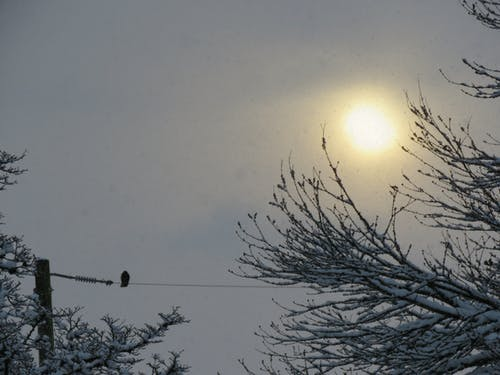 Free stock photo of bird on a wire, canada, canadian winter