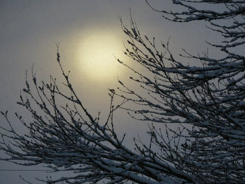 Free stock photo of canadian winter, northern beauty, ominous