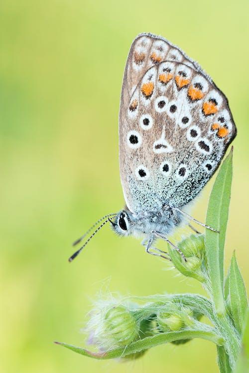 Brown Black Butterfly Macroshot