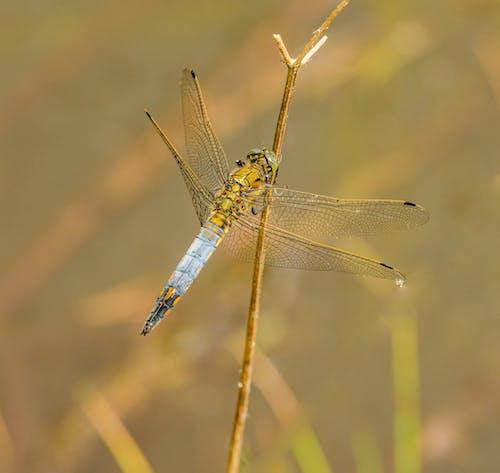 Macro Shot of a Dragonfly
