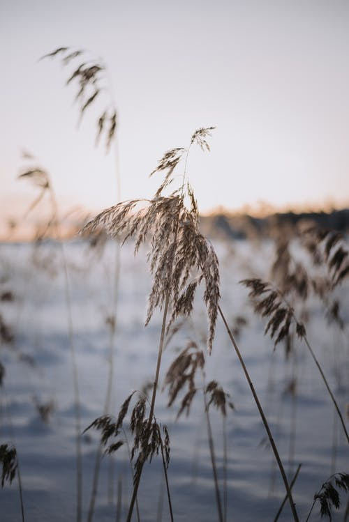 Close-Up Shot of Wheat Plant