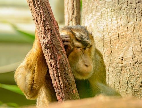 Selective Focus Photo of a Monkey Sleeping