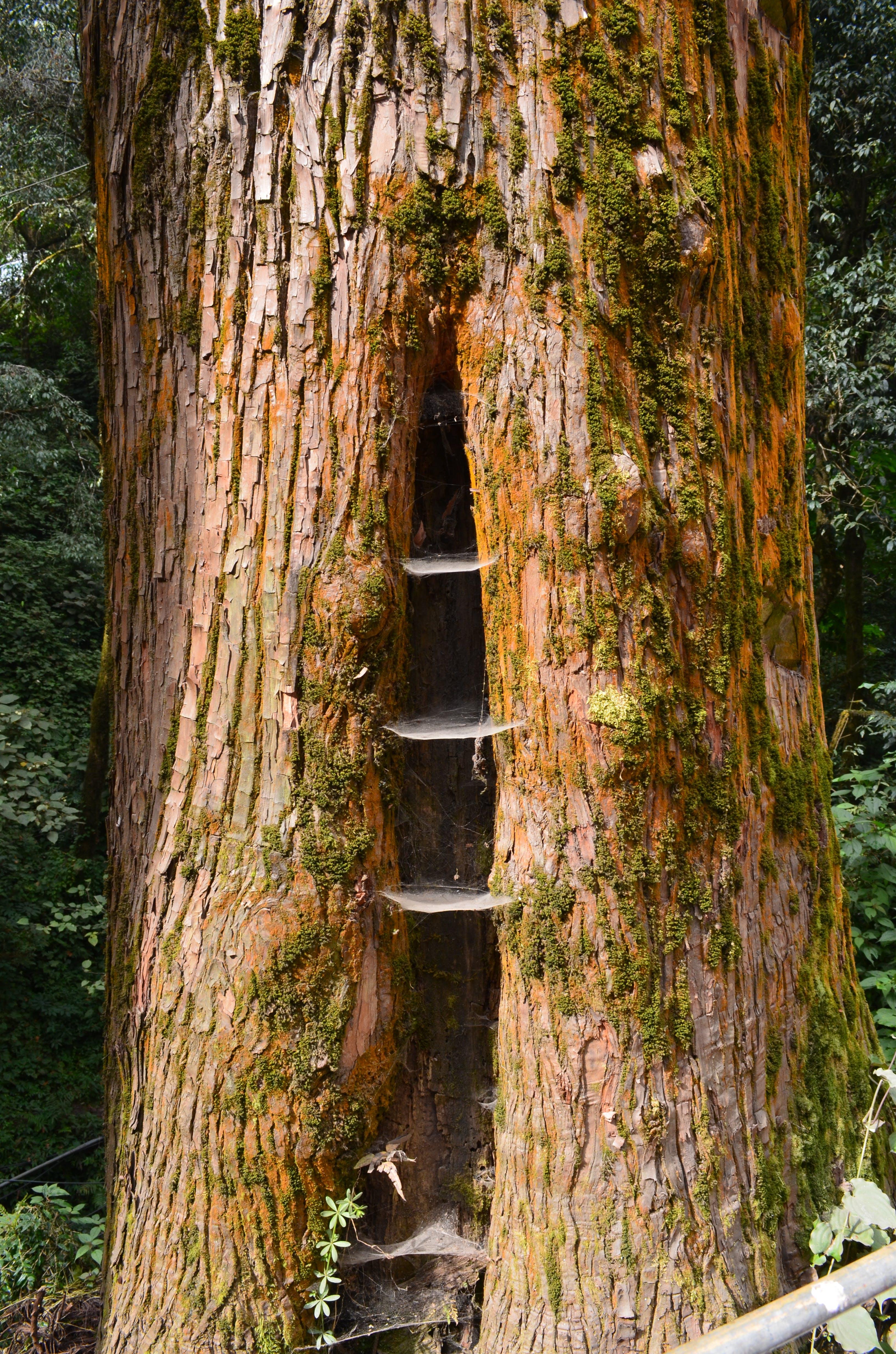 Free stock photo of tree, tree bark