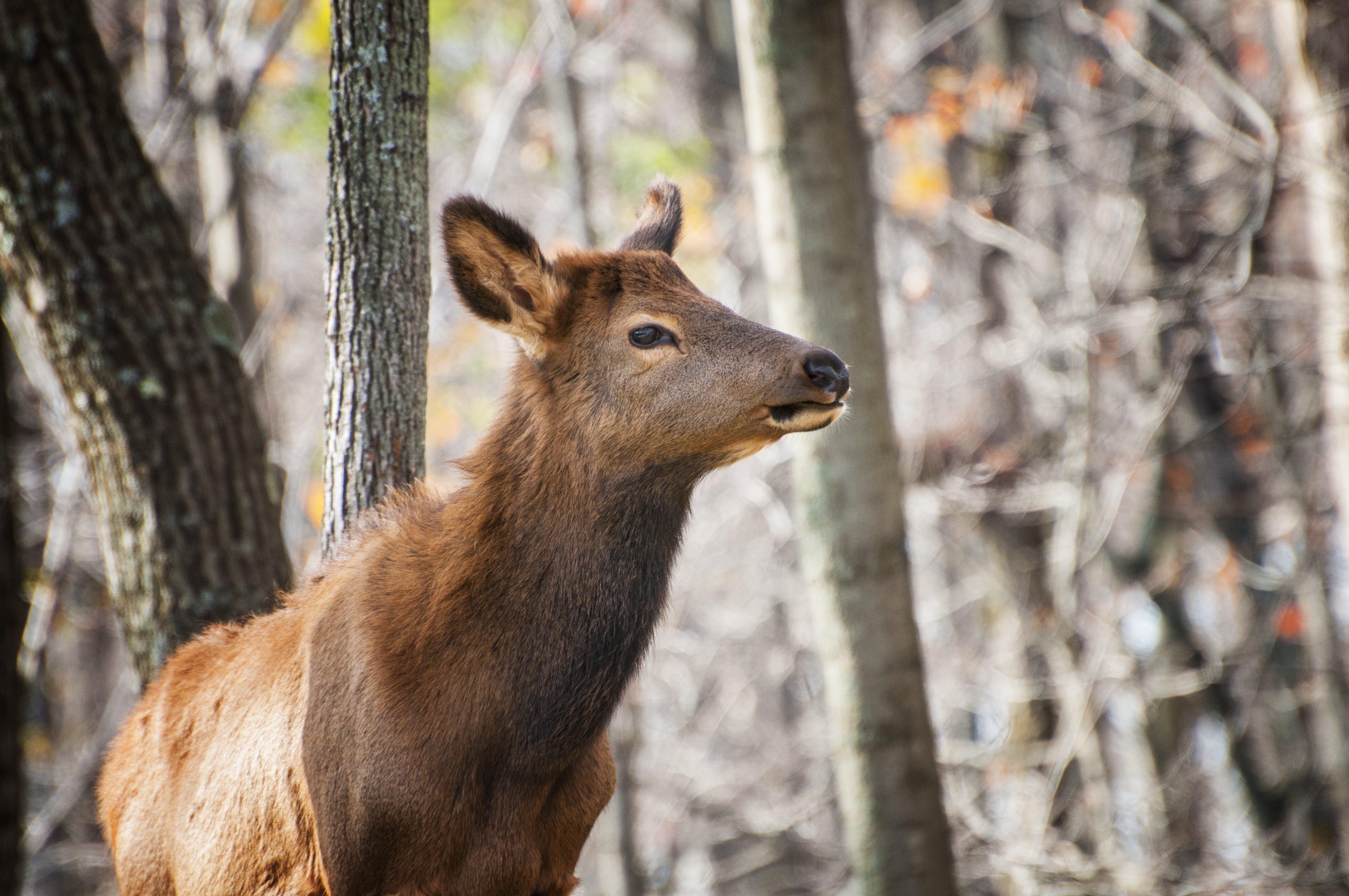 ハーシュ, パーク, フォーカス, 動物の無料の写真素材