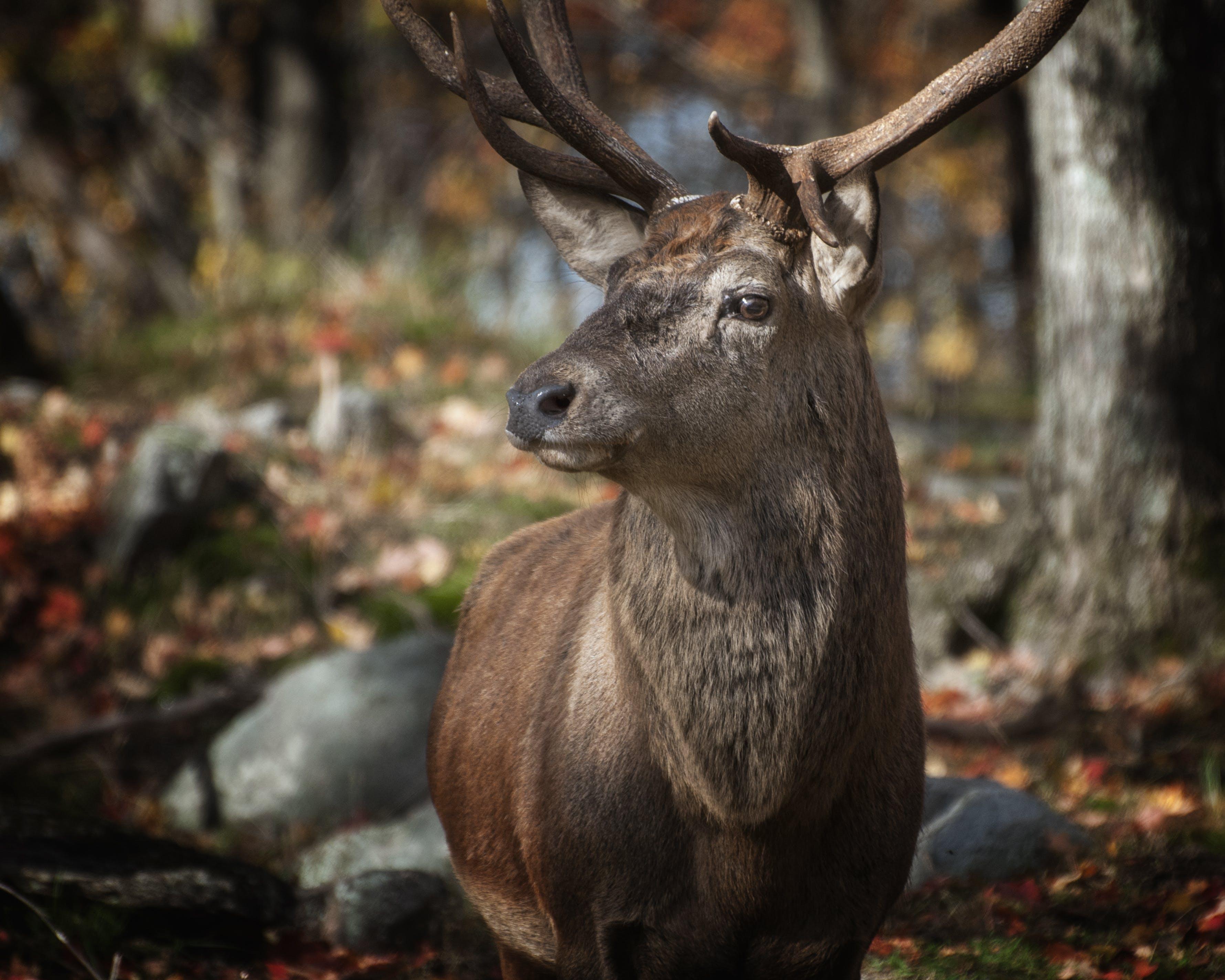 Tilt Shift Lens Photography of Deer