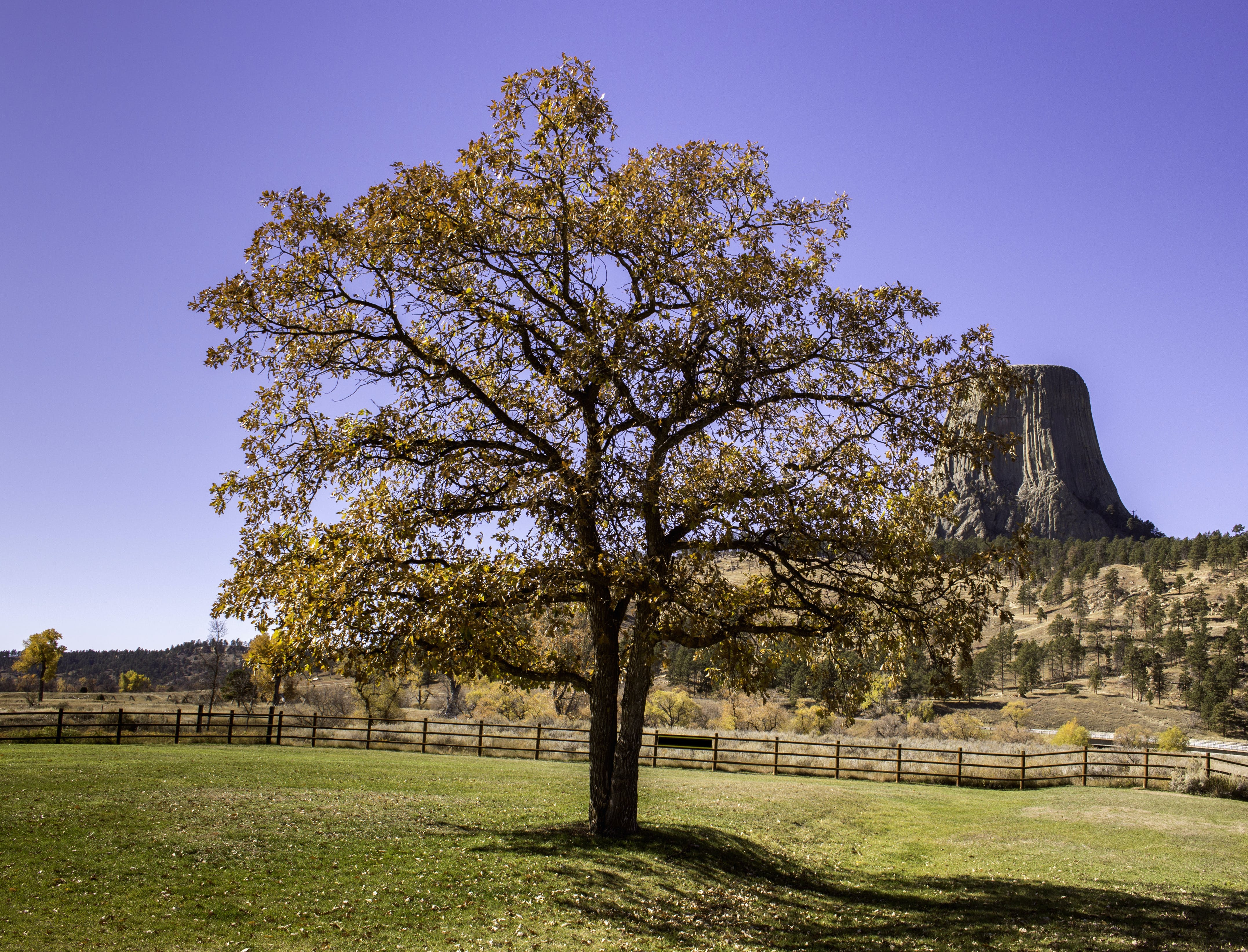 Free stock photo of autumn, devils tower, fall, leaves