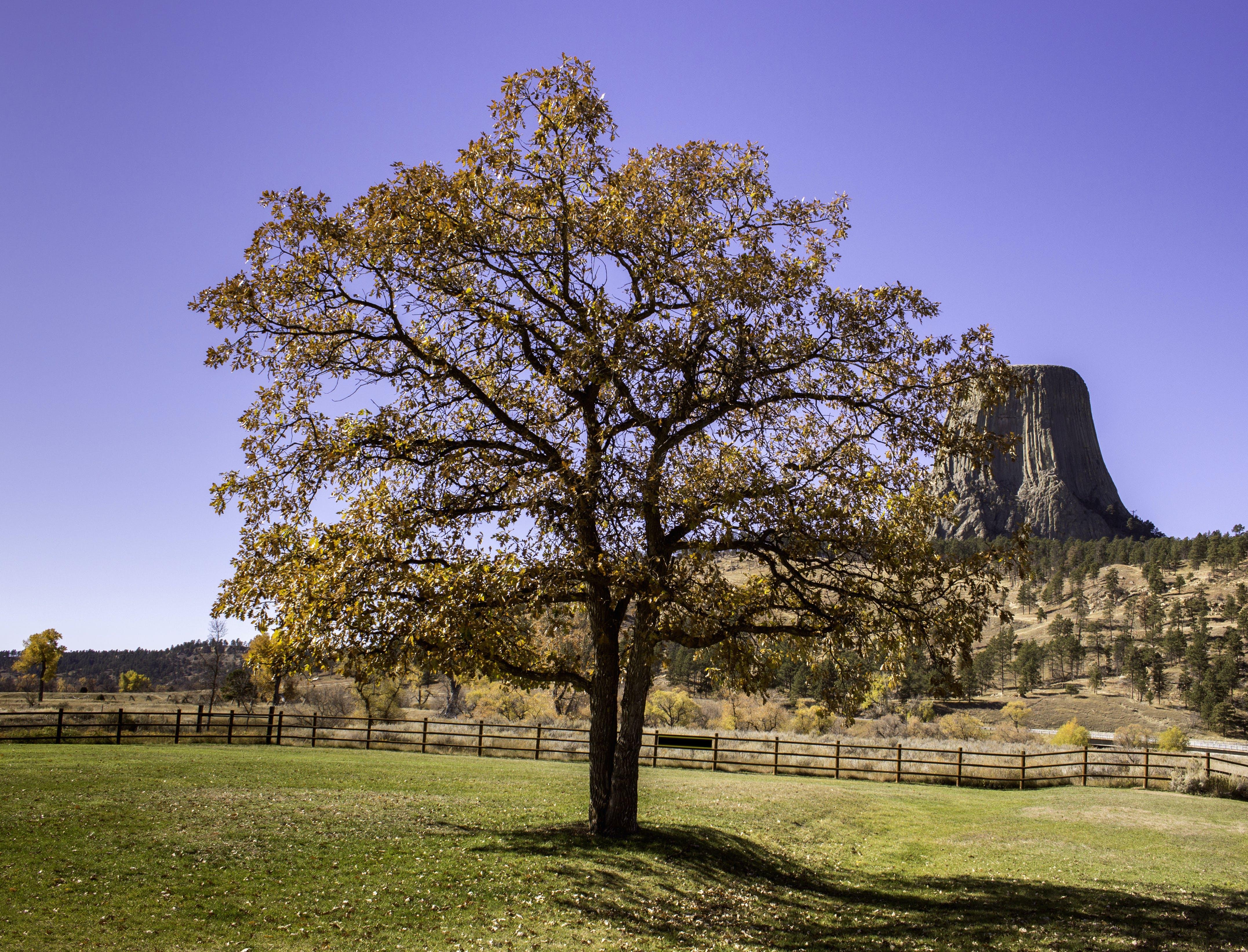 Gratis lagerfoto af djæveler tårn, nationalt monument, natur, sæson