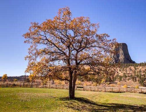 Foto d'estoc gratuïta de arbre, EUA, monument nacional, natura