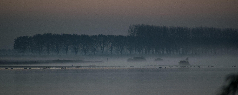 Gratis lagerfoto af landskab, lys refleksioner, mystisk, tåget