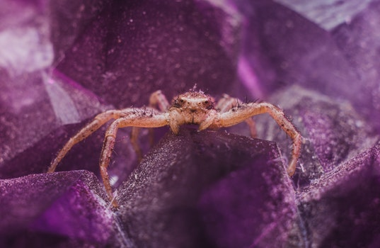 Brown Spider on Purple Crystal