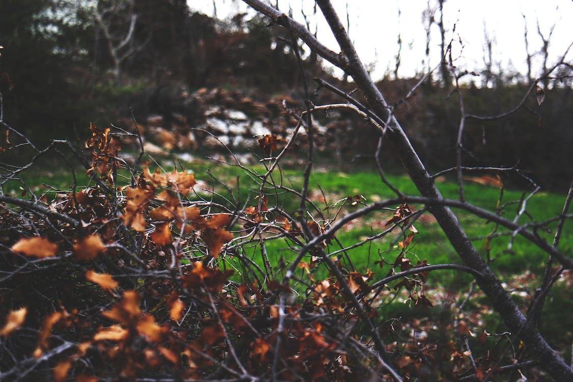 arboles, bosque, color