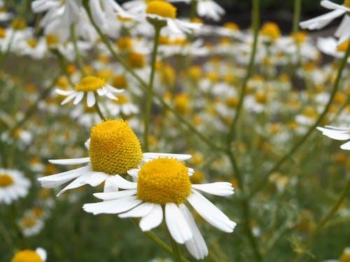 Photos gratuites de à base de plantes, arrière-plan, brillant, brouiller