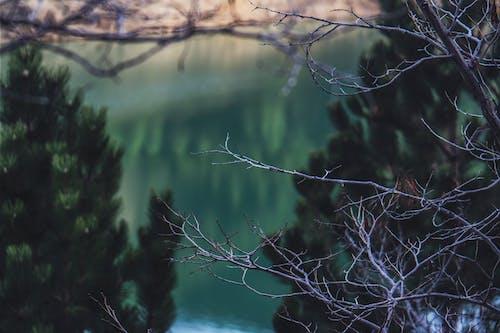 Kostnadsfri bild av falla, grenar, gryning, HD tapeter