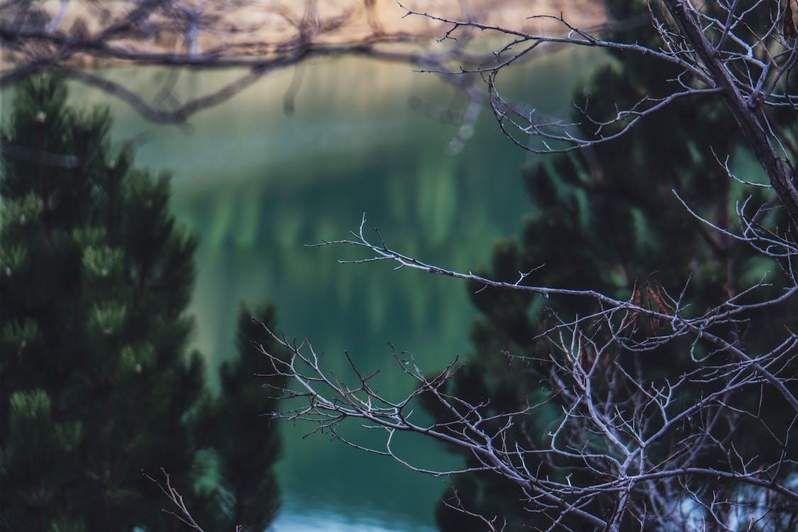 arbres, aube, bois
