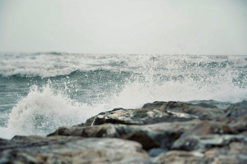 Free stock photo of beach, dawn, foam