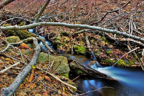 Бесплатное стоковое фото с ветви, вода, водопад, дерево
