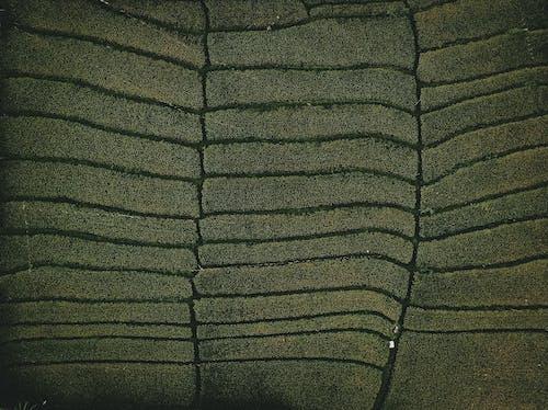 黑白條紋紡織