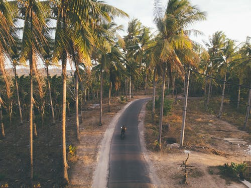 From above of anonymous person riding motorbike on asphalt road surrounded with tall verdant palms in daytime