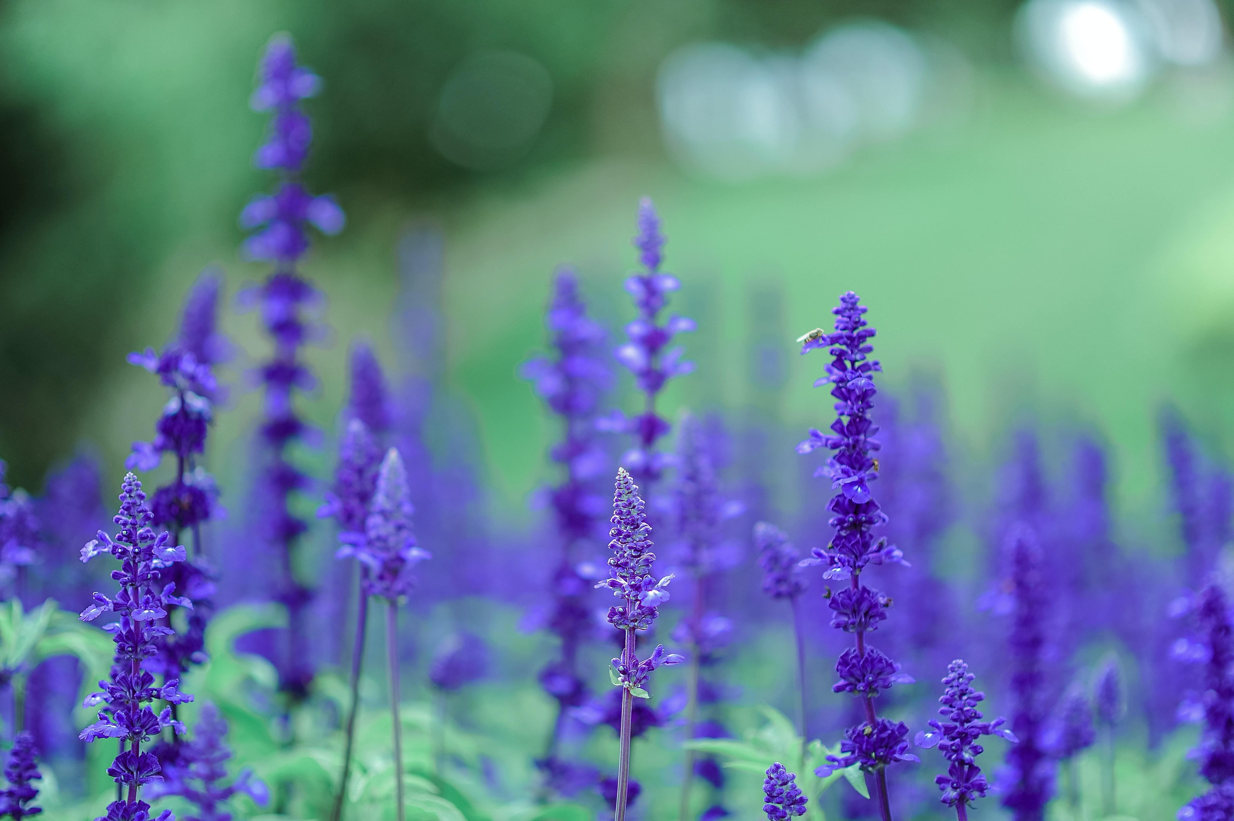Donate Your Car >> Purple Petal Flower · Free Stock Photo